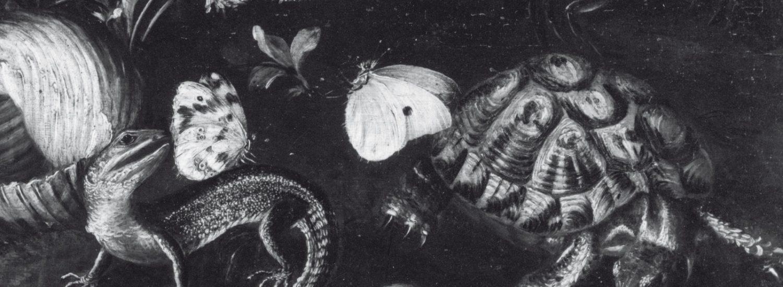 Collezionismo di nature morte tra Sei e Settecento